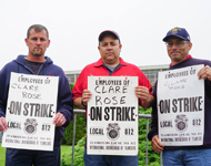Clare Rose Strike Week 11
